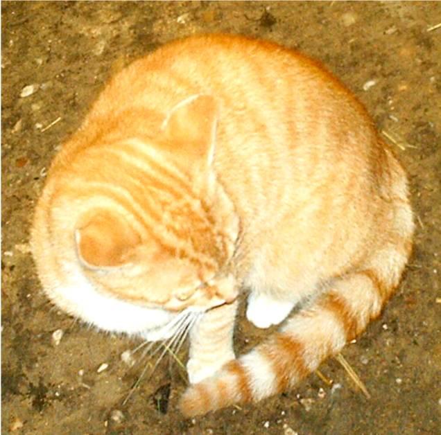 vermissen katzen ihre menschen